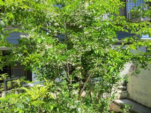 Garden-cote-01_20210503225201