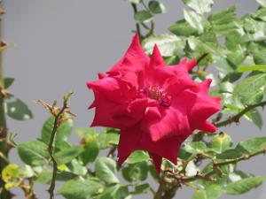 Garden-cote-02_20200513114701