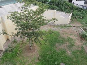 Garden-cote-02_20200816192601