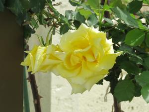 Garden-cote-02_20210408142101