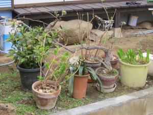 Garden-cote-03_20200331103901