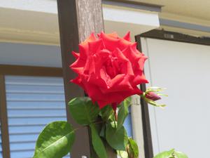 Garden-cote-03_20200429141201