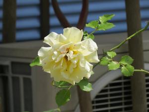 Garden-cote-03_20200513114701