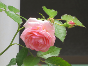 Garden-cote-03_20200528164001