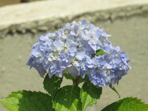 Garden-cote-03_20200603141101