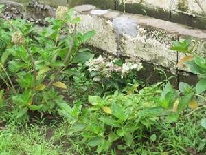 Garden-cote-03_20200728123001
