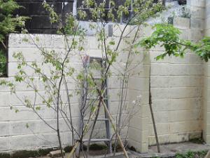 Garden-cote-03_20210403235601