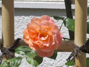 Garden-cote-03_20210427154601