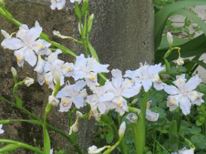 Garden-cote-04_20200411140901