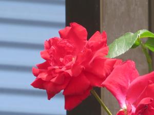 Garden-cote-04_20200528164001