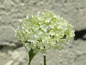 Garden-cote-04_20200603141101