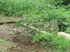 Garden-cote-04_20200728123001