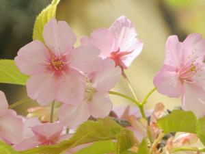 Garden-cote-04_20210311195401