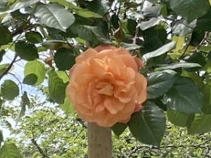 Garden-cote-04_20210422201601
