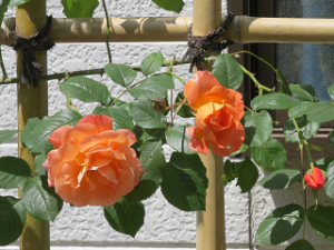 Garden-cote-04_20210427154601