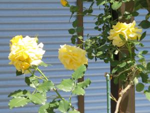 Garden-cote-05_20210427154601