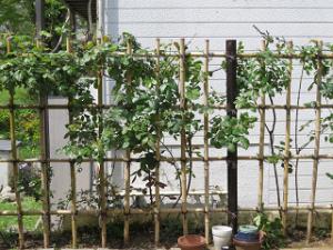 Garden-cote-06_20210416164201