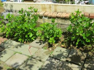 Garden-cote-06_20210427154601