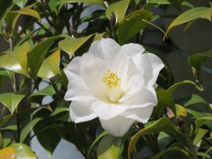 Garden-cote-07_20210403235501