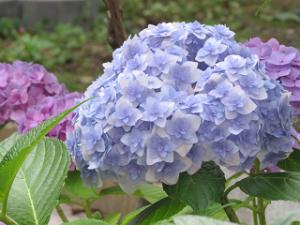 Garden-cote-08_20210607185801