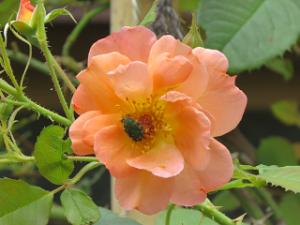 Garden-cote-092