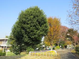 Green-road-park-01_20201118130001