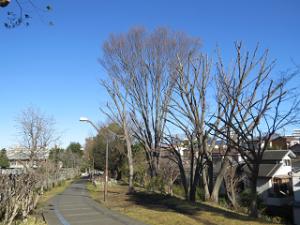 Green-road-park-02_20200109220101