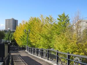 Green-road-park-02_20201109122001