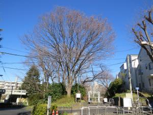 Green-road-park-03_20200109220101