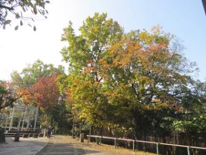 Green-road-park-06_20201118130001