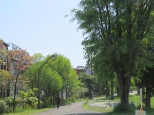 Green-rode-park-05
