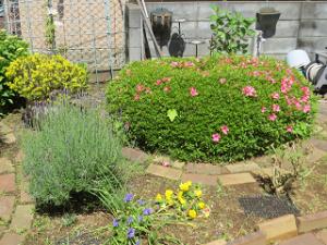 Mothers-garden-01_20200517112901