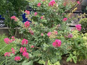 Mothers-garden-02_20210807165401
