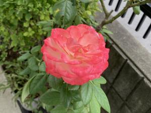 Mothers-garden-02_20210912104001