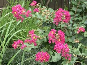 Mothers-garden-03_20210807165401