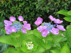 Mothers-garden-04_20210605172901
