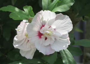 Mothers-garden-04_20210626130401