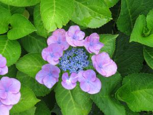 Mothers-garden-05_20210605172901