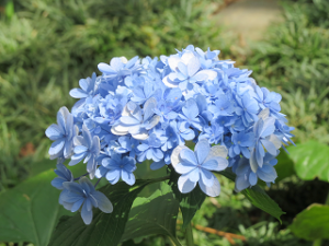 Mothers-garden-05_20210626130401