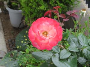 Mothers-garden-06_20210522183201