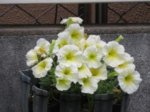 Mothers-garden-07_20210522183201