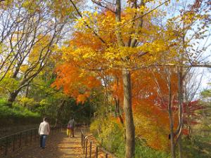 Nature-park-03_20201213144301