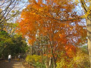 Nature-park-04_20201213144301