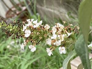 Ozaki-flower-park-04
