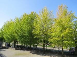 Ryokudo-park-03