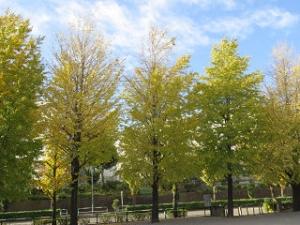 Ryokudou-park-03