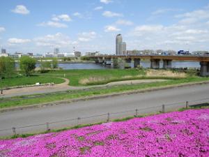 Sibazakura-01_20210404005901