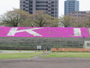 Sibazakura-03_20210408171901