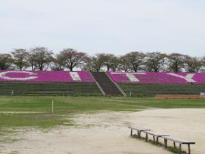 Sibazakura-05