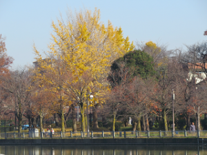 Ukima-park-019